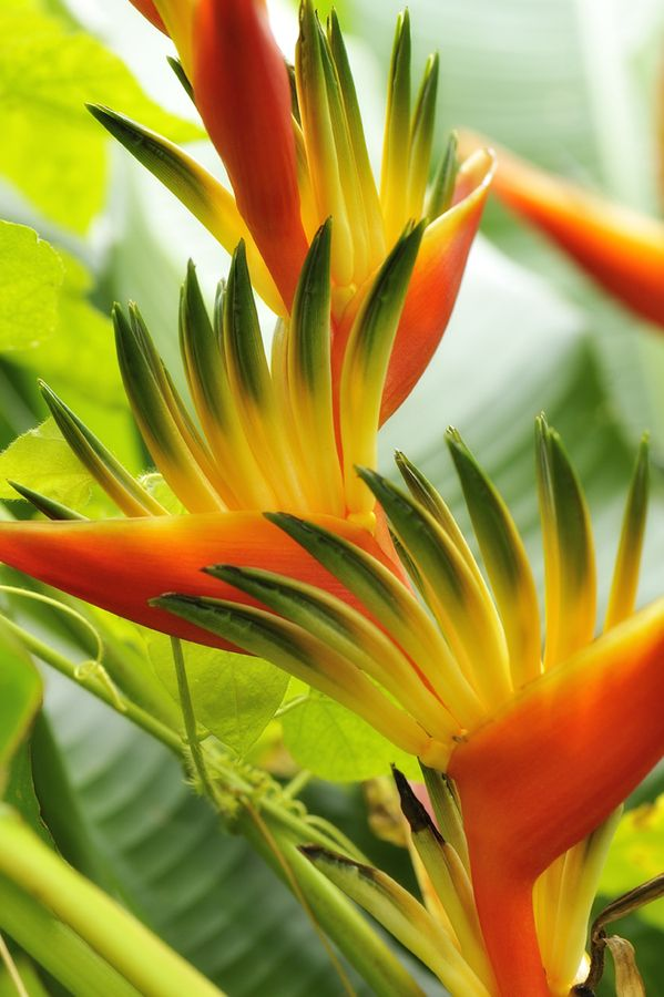 In the Sunlight by Jean-Luc Renouil, via 500px - A bird of paradise growing in lush profusion on the island of Réunion, 120 miles off the coast of Madagascar in the South Atlantic.  I just learned that the island is an integral part of France, and is the most distant member of the Eurozone, due to its being a region of France.