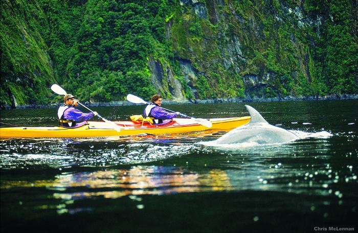 New Zealand - Kayaking with dolphins in Fiordland National Park