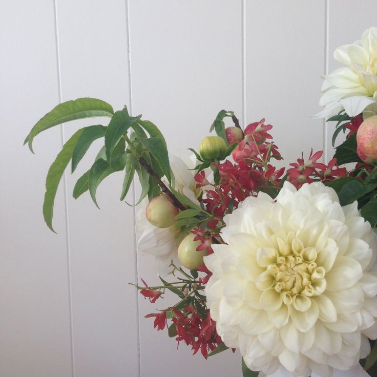 Christmas bush, dahlias and peaches-on-the-branch