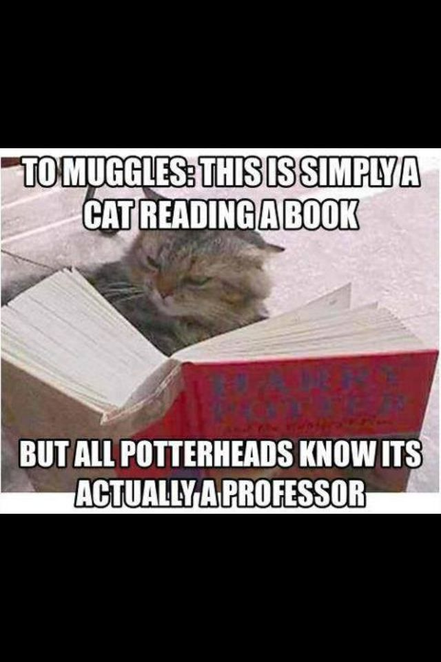 Actually, we Potterheads know this is not Professor McGonagall because this cat does not have the markings around the eyes that resemble her spectacles.