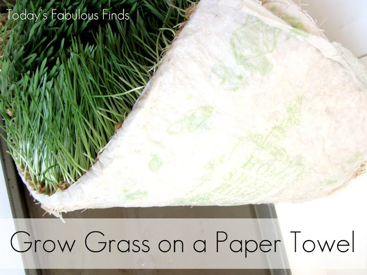 Today's Fabulous Finds: Wheat Grass Centerpieces (Grown on Paper Towels)