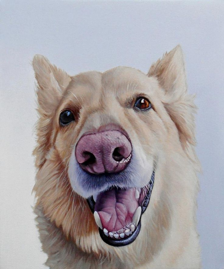 James Ruby Works - DOG PORTRAIT GALLERY - RECENT WORKThis page contains a rotating selection of paintings completed within the past twelve months.