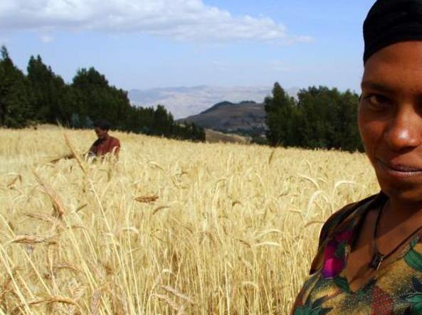 Una contadina in un campo di grano sugli altipiani dell'Etiopia (foto UsAid)