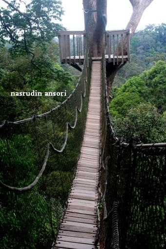 Bukit Bangkirai « Wisata Kalimantan, beautiful places to visit in Indonesia.