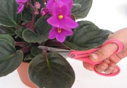 Moltiplicazione di piante da appartamento da www.kigaportal.com