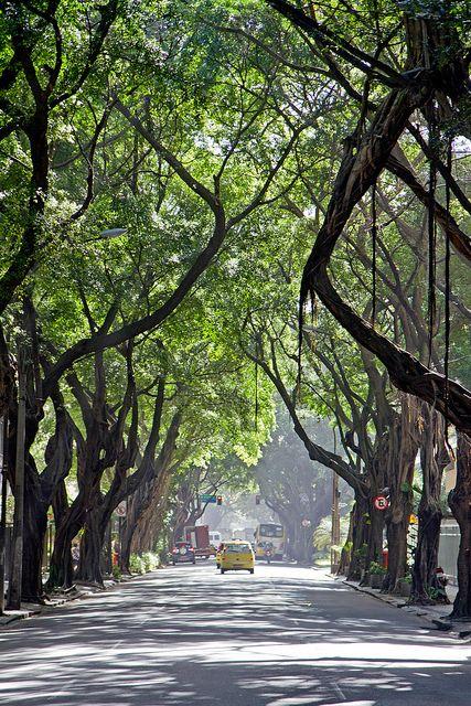 Ipanema Trees, Rio de Janeiro, Brazil