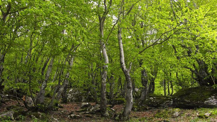 La resiliencia de los bosques mitiga el cambio climático