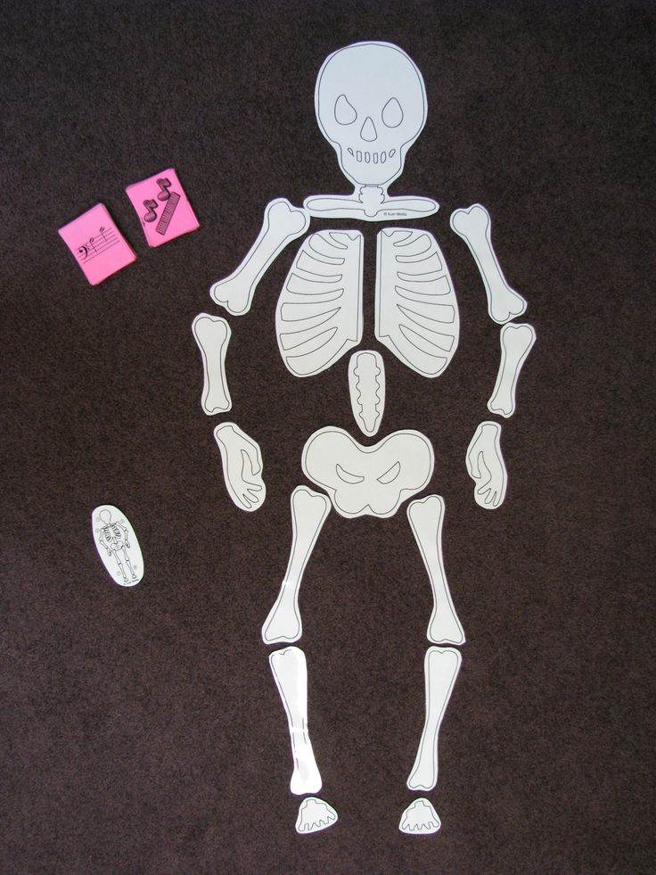 6 photo of 48 for human skeleton printout - Halloween Skeleton Template