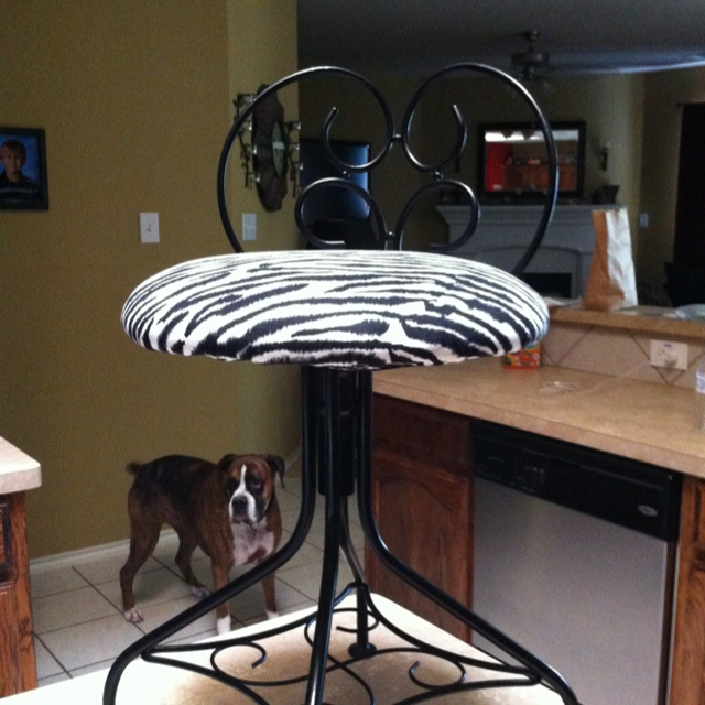 Enchanting Vanity Chair Zebra Pictures - Best image 3D home ...