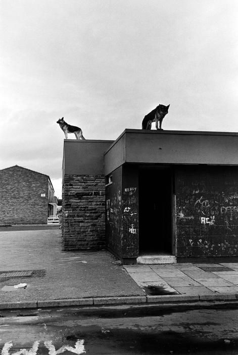 """""""can you come out here please?"""" He asks from the other side of the phone. I laugh, """"why?"""" """"Because you have two wolves on your roof."""" """"They're for protection... mostly from you."""""""
