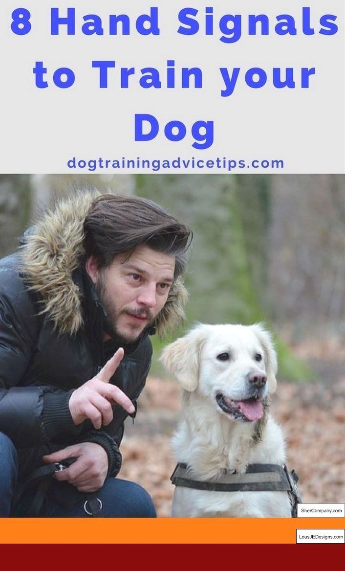 Grouse Dog Training Tips And Pics Of How To Train A Dog Not To