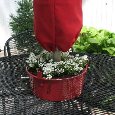 bundt pan from thrift store, painted & planted (holes drilled for drainage?) - umbrella fits right thru the hole!