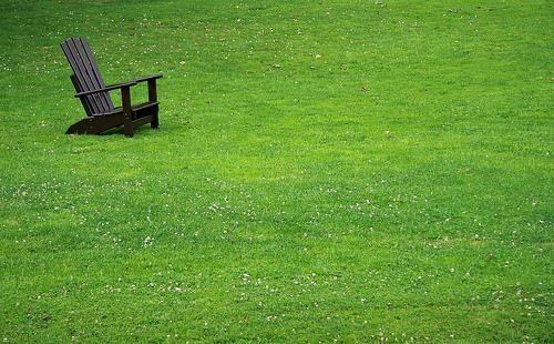 White Clover Landscaping Dwarf Lawn Landscape Pinterest And Gr Alternative