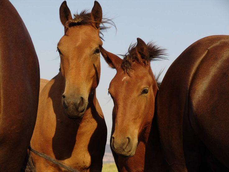 """""""Pour parler à un cheval, il n'y a pas besoin de mots.  C'est une étreinte charnelle qui alimente nos rêves.""""  -Bartabas-"""