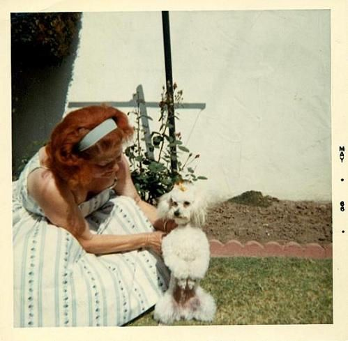 Bien-aimé 678 best Vintage Photos Animals images on Pinterest | Dog photos  BC69