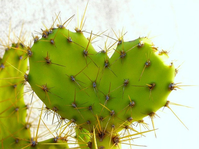 .: Shaped Cactus, Nature S Valentines, Nature S Hearts, 3Hearts 3, Heart Photos, Nature Natural Hearts