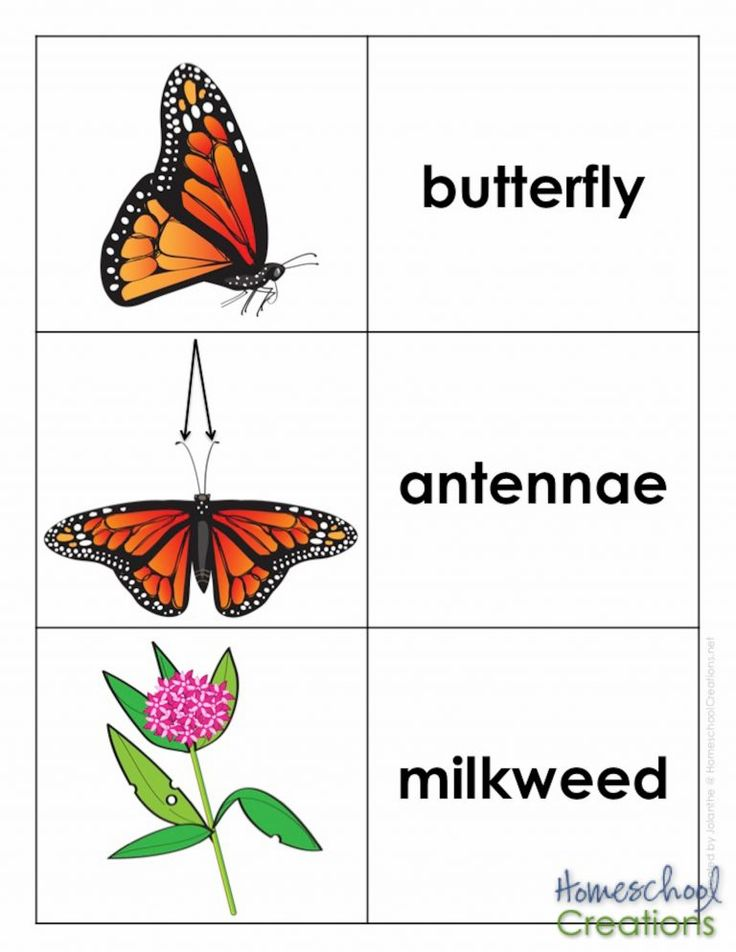 Monarch Butterfly Life Cycle Printables Butterfly life