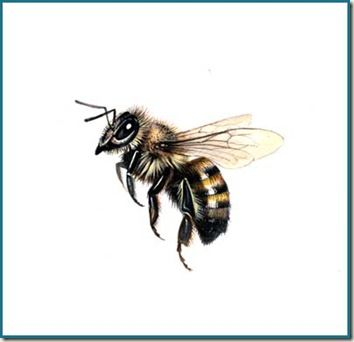 Best 25 Honey Bee Drawing Ideas On Pinterest