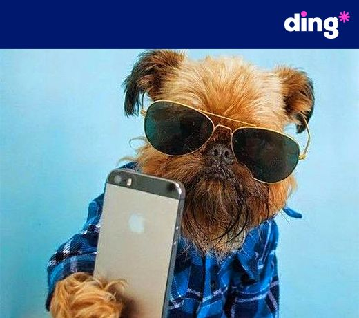What's pup? ding* is so simple even our dog friends like to use it to top-up! Top-up someone close to you today! www.ding.com