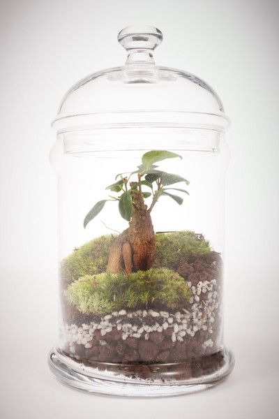 Mini Dôme - Terrarium humide Green Factory