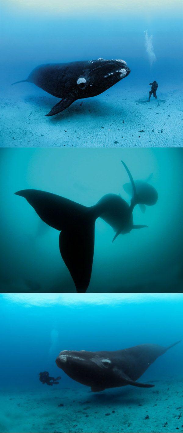 Nadando con ballenas