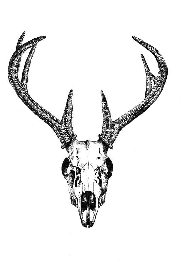 Deer Skull, A4 - Buy at ArtRebels.com
