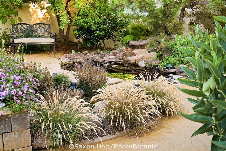 Calamagrostis foliosa, California native leafy reedgrass flowering in small backyard drought tolerant garden