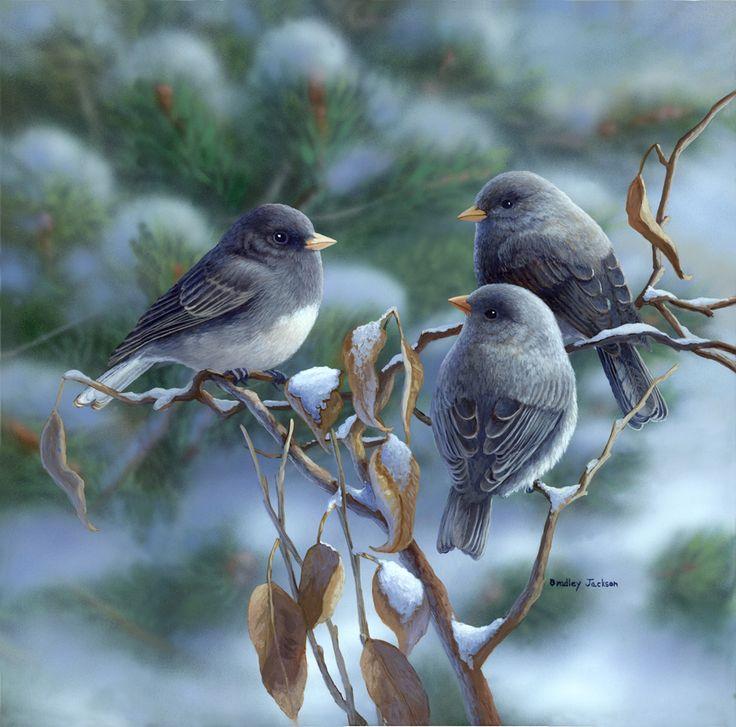 """Winter Morning"" - Juncos - bird painting by Bradley Jackson"