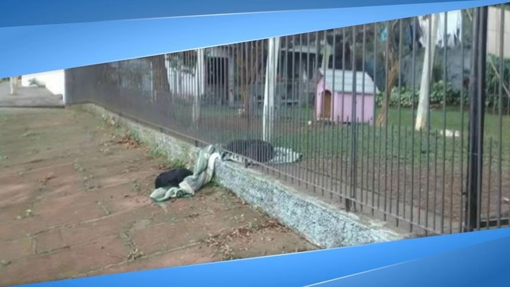 Source: www.thedodo.com Credit: www.facebook.com/cdh732 Lana lives in Brazil, where she was rescued from the streets with her siblings late last year. Not lo...