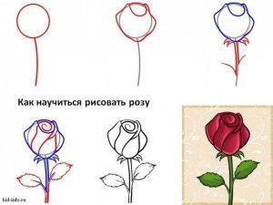 Como Dibujar Rosas Rojas Realistas 2 Lugares Para Visitar