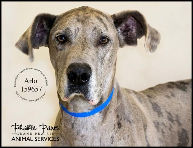 Adopt Arlo On Pet Adoption Pets Animals