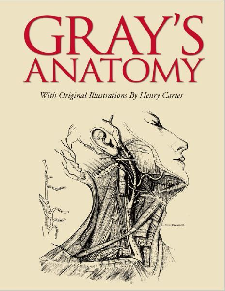 Gray S Anatomy 1st Edition Mebooksfree Pinterest