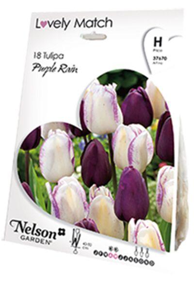 Antall løk i pakken: 18 stk En vakker samplanting med tulipan 'Negrita' og 'Shirley'. Den mørke purpurfargen i 'Negrita' tas opp i de lilla flekkene og strekene i 'Shirley'.
