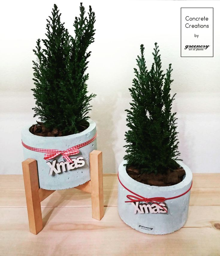 Ellwood in concrete pot! #greenery #christmas #xmas #gifts #greece