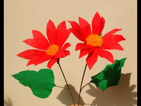 How to easily plant flower seed for a beautiful garden youtube - Best 20 Mexican Sunflower Ideas On Pinterest