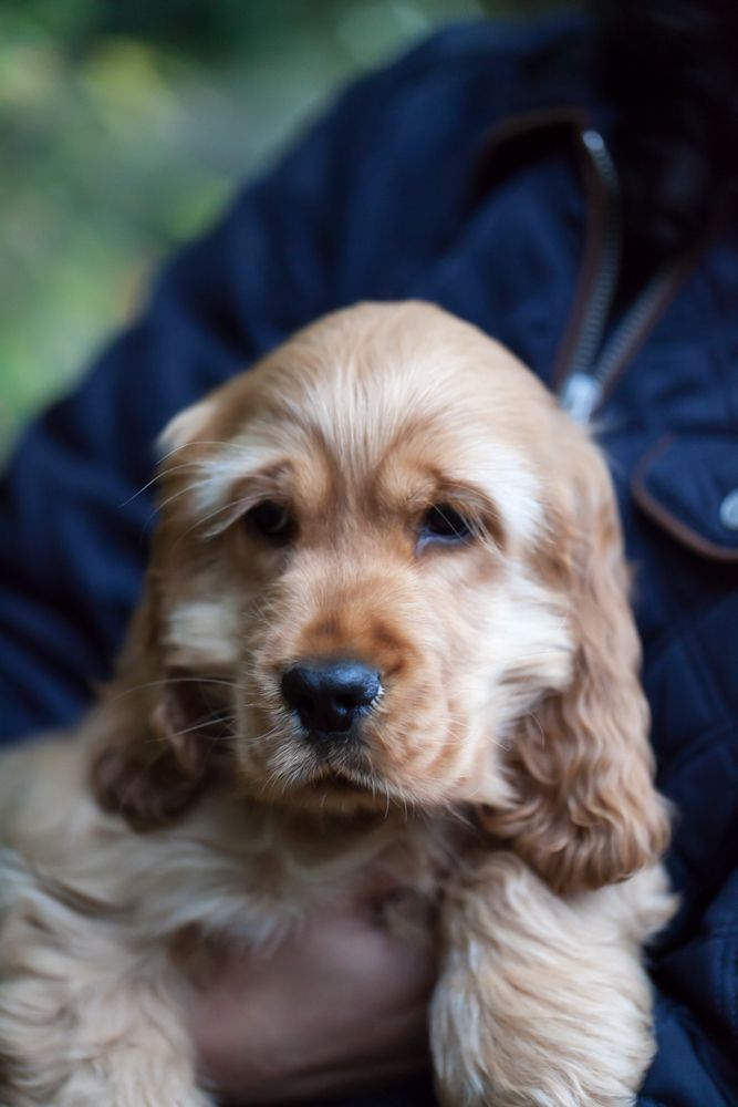 Mondaymotivation Jeffy Cat Insurance Dog Insurance Best Dogs