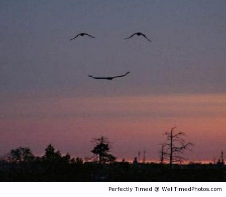 Birds make a face in the sunset – Even birds like to make you smile, when in formation.