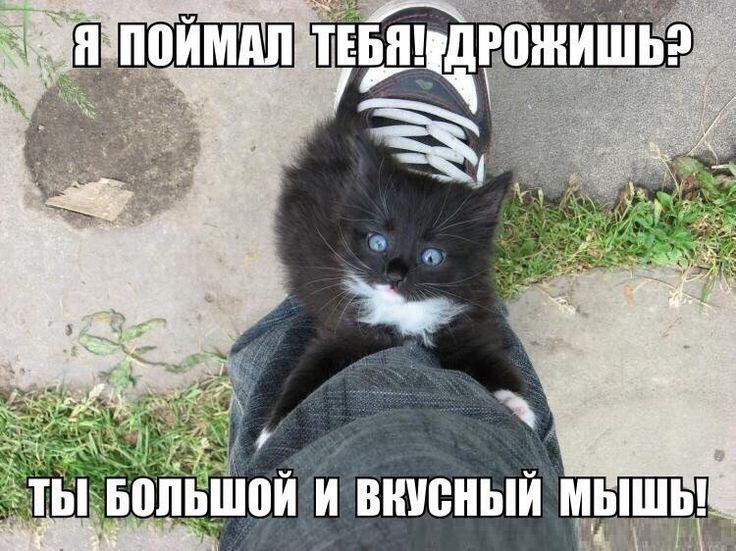 Кошки и собаки | Смех и умиление ツ