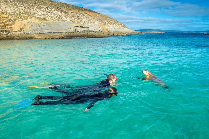 Swim with sea lions on the Eyre Peninsula