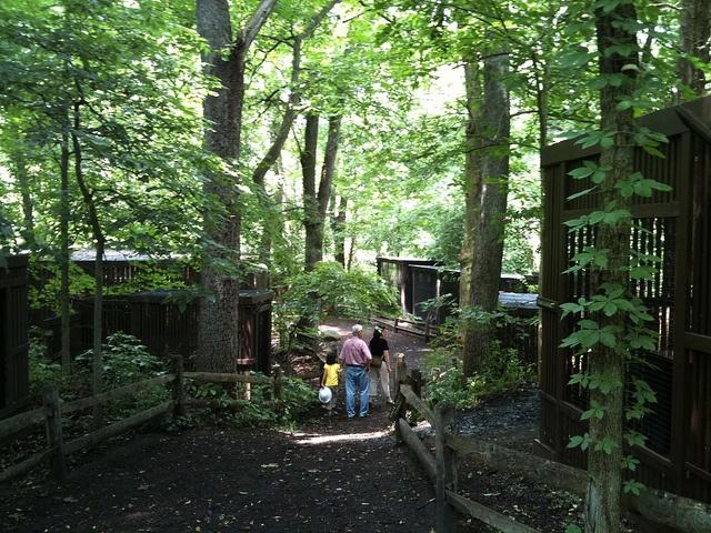 Brukner Nature Center Wildlife Rehabilitation