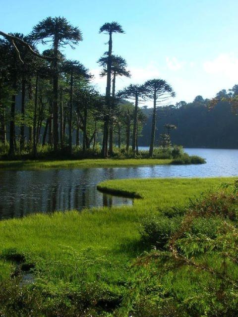 Parque Nacional Huerquehue, IX Región de la Araucanía, CHILE