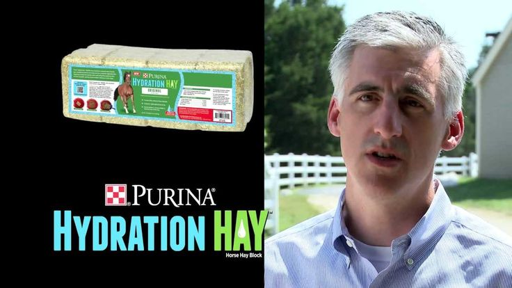 A Veterinarian's Perspective on Purina Hydration Hay- Dr. Stu Robson