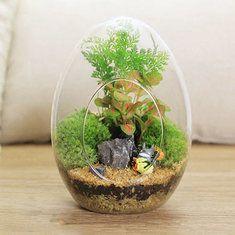 #Banggood Яйцевидной формы поделки мох микро пейзаж стеклянная бутылка суккулентных растений ваза украшение дома (1064152) #SuperDeals