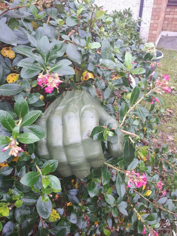 A toy hulk hand in the hedge, creepy!