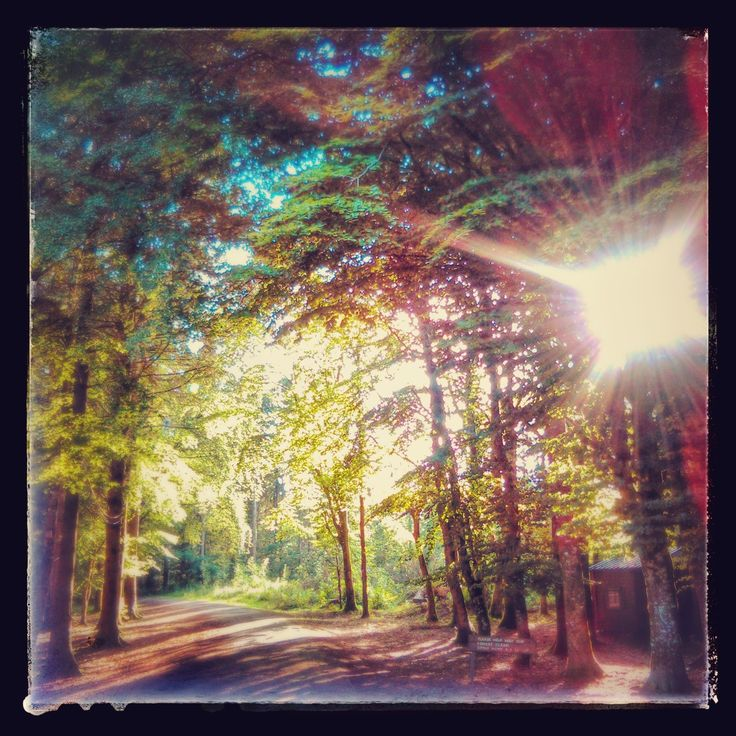 Summer in Donadea Forest Park county Kildare former home of the Almere family.