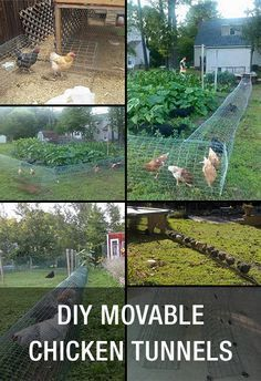 DIY Movable Chicken Tunnels: http://www.mychickencoop.net/diy-movable-chicken-tunnels/ #chicken #tunnels #diy #poultry