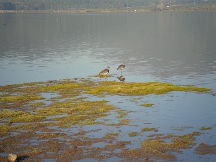 Lago Colbun-Chile