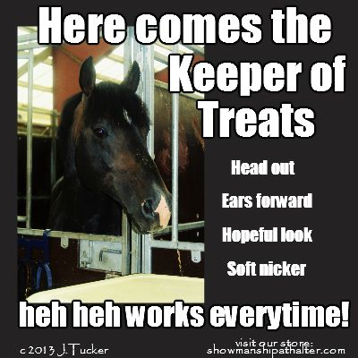 589d58803d6dac930accb913292420df it works keeper 520 best horses that make you laugh images on pinterest funny,Funny Barn Memes