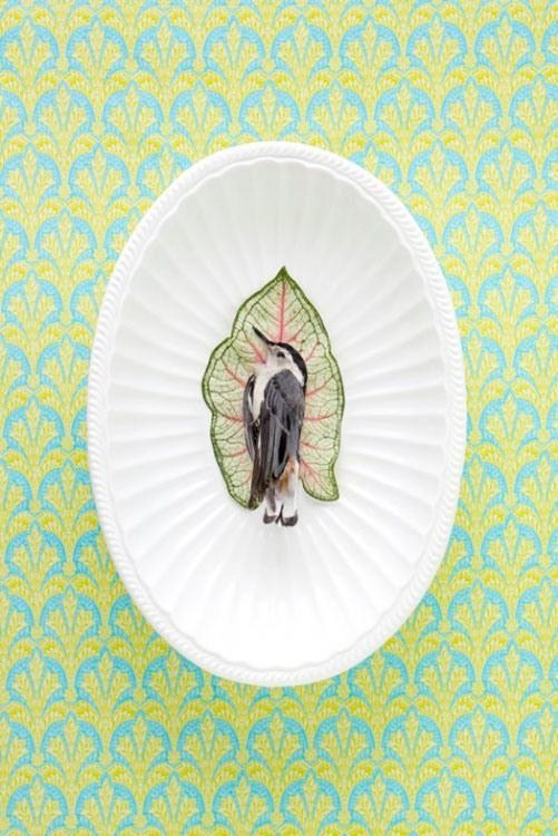 "From the mind, hands, and camera of photographer and taxidermist Kimberly Witham comes an oddly creative series of photographs titled ""Domestic Arrangements""…"