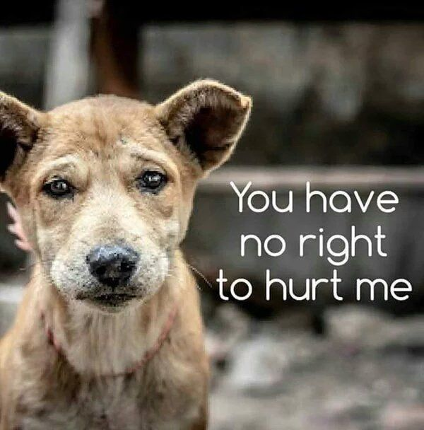 End Yulin dog meat festival- PLEASE!! Repin this!! The yulin dog meat eating festival is June 20t- were running out of time!!! https://www.change.org/p/stop-the-yulin-dog-meat-eating-festival Please sign